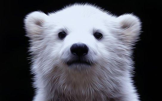 Polar Bear, Cub, White, Head, Mammal, Arctic, Predator