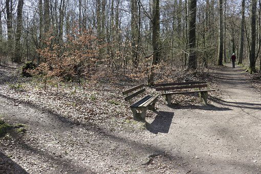 Bench, Forest, Go For A Walk, Rest