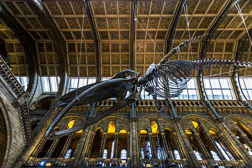London, England, Natural History Museum, Science