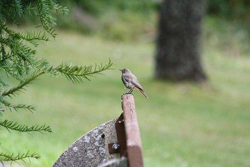 Park Bench, Bird, Black Forest, Calm, Sitting, Nature
