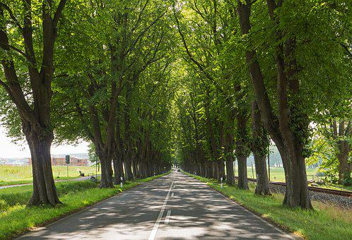 Old Avenue, Trees, Canopy, Road, At The Entrance To