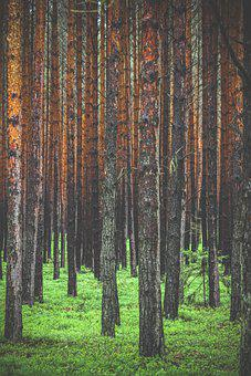 Forest, Tree, Trees, Landscape, Light, Sun, Fog, Path
