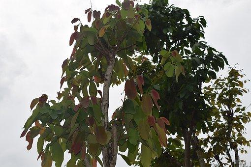 Tree Leaf, Animal Food, Kingfisher, Tree