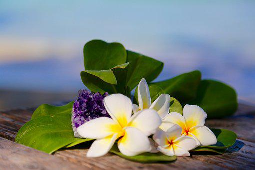 Plumeria, Gemstone, Beach, Hawaii, Purple, Amethyst