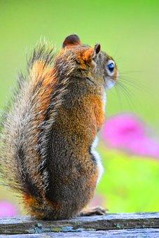 Squirrel, Canada, Banff, Nature, Chipmunk, Wallpaper