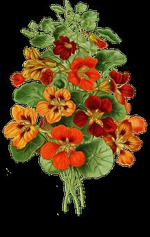 Vintage, Flowers, Nasturtium, Colorful, Bouquet