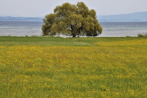 In The Morning, Tree, Meadow, Green