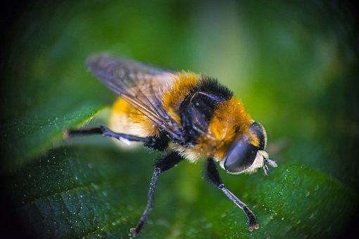 Bumble Bee, Macro, Leaf, Animal, Insect, Colors, Leaves