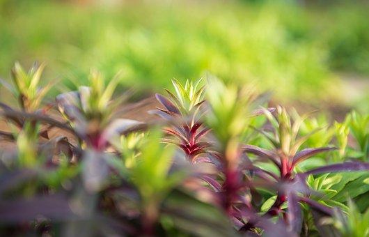 Bart Cloves, Lighting, Grow, Plant, Spring, Nature