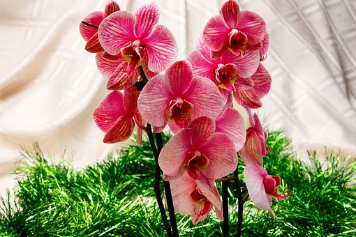 Orchid, Flower, Pink, Petals, Nature, Exotic, Colorful