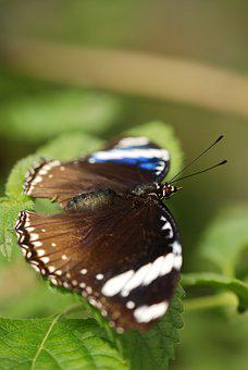 Butterfly, Bug, Colors, Nature, Insects