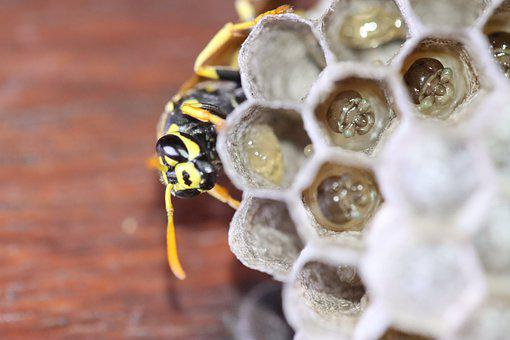 Wasp, Boy, Hatching, Rearing, Risk, Fear, Young, Larvae