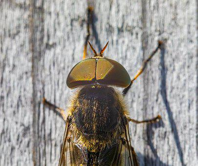 Horse-fly, Insect, Leaf, Summer, Outdoors, Springtime