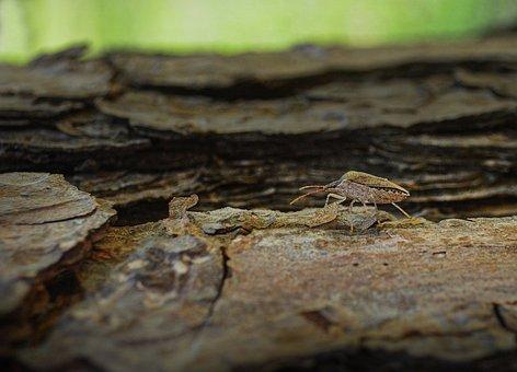 Stink Bug, Insect, Bug, Nature, Stink, Beetle, Wildlife
