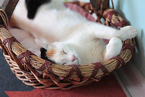 Cat, Kitty, Cats, Cute, My Beloved Cat, My Dear Cat