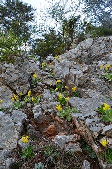 Rock, Mountain, Forest, Lower Austria