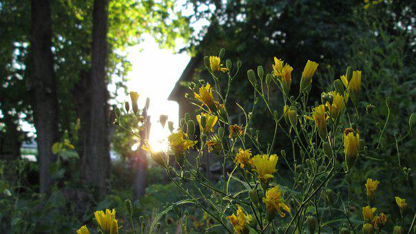 Nature, Flowers, Magic, Retro, Sunset, House, Garden