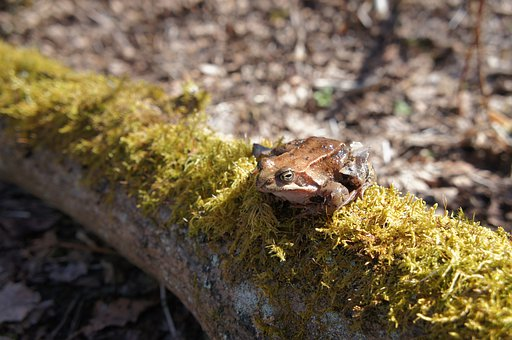 Frog, Toad, Sun, Spring, Moss, Tree