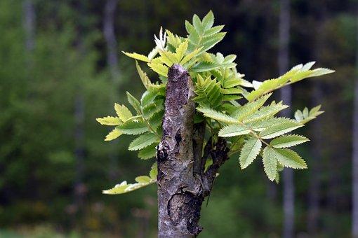 Seedling, Spring, Forest, Branch, Green, Nature