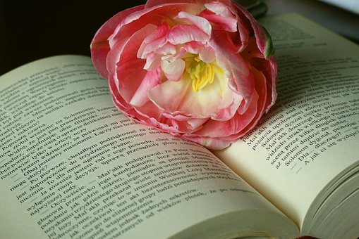Tulip, Book, Open Book, Manual, Knowledge, Text