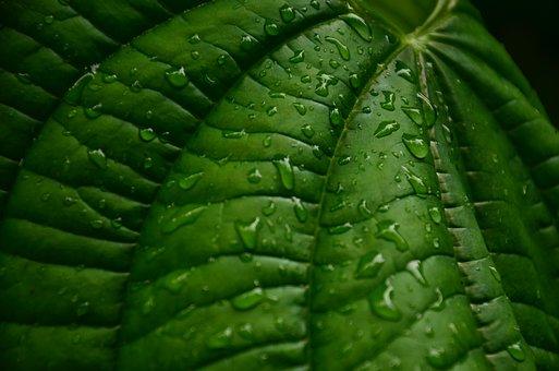 Wet, Droplet, Fresh, Leaf, Patterns, Nature