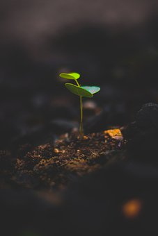 Plant, Growth, Leaf, Green, Sprout, Seedling, Nature