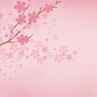 Sakura Digital Paper, Cherry Blossoms, Pink, Japanese