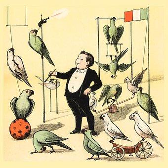Parrots, Birds, Animals, Circus, Vintage, Tricks