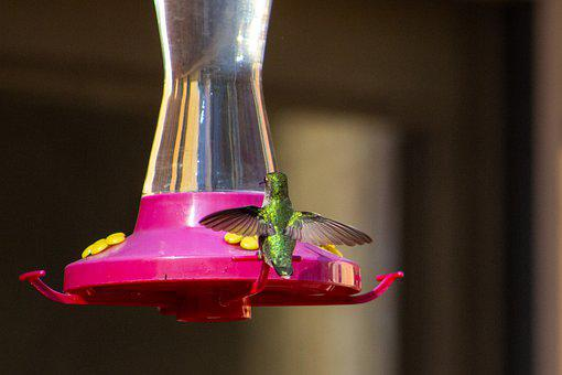 Hummingbird, Wings, Wingspan, Flying, Nature, Wildlife