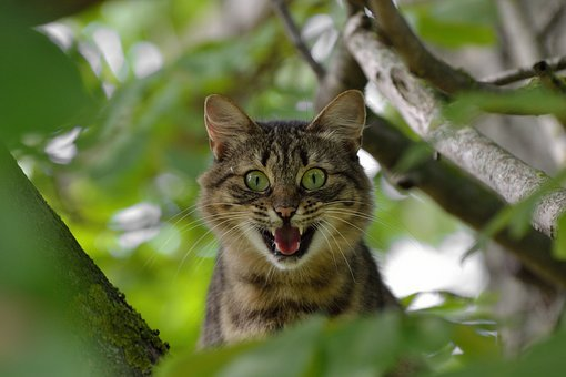 Cat, Aggression, Emotions, Fear, Surprise, Anger