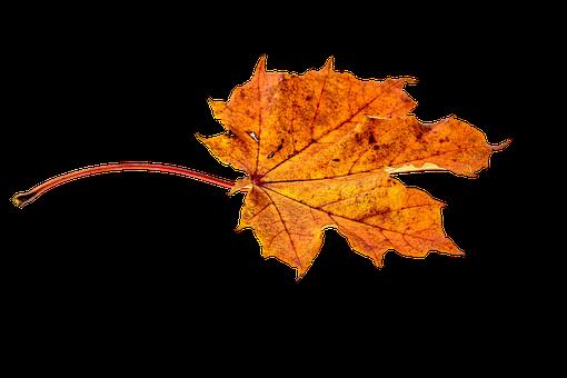 Autumn, Leaves, Leaf, Png, Transparent, Fall Color