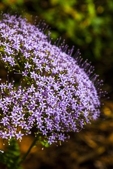 Lilac, Flowers, Flower, Hope, Air, Aroma, Small, Nature