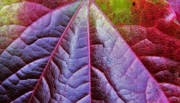 Autumn Leaf, Partial View, Autumn Colours