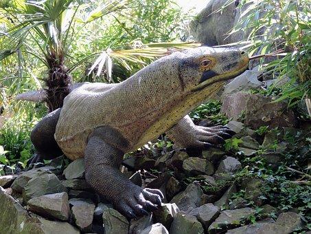 Monitor, Lizard, Plastic, Animal, Varanus, Reptile