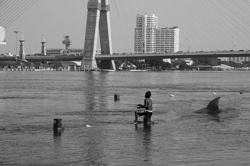Shark, Fishing, River, Fish, Water, Nature, Animal
