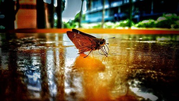 Goblin, Sweater, Pretty, Butterfly, Moth, Ground, Wet