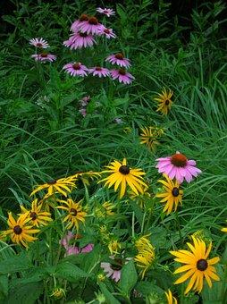 Wildflowers, Purple Coneflower, Yellow, Pink
