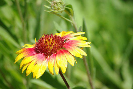 Flower, Yellow, Red, Green, Leaves, Stems, Blossom