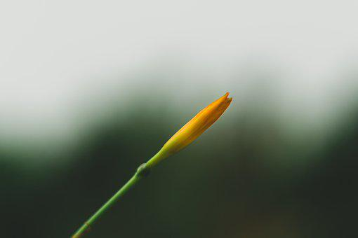 Bokeh, Green, Grass, Nature, Dew, Yard, Meadow, Blur