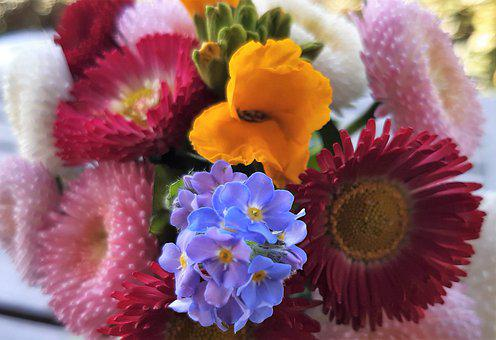 Spring Flowers, Bouquet, Colorful, Bellis, Daisy, Red