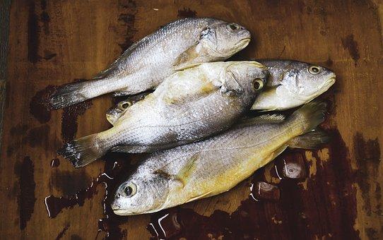 Fish, Raw Fish, Wet, Seafood, Salmon, Raw, Food, Fresh