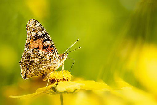 Butterfly, Insects, Nature, Flowers, Wing, Macro, Moth