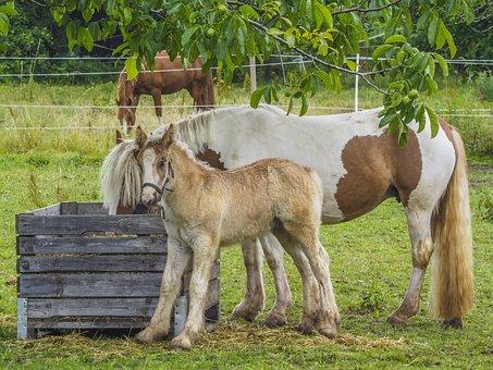 Animal, Horses, Nature, Landscape, Pasture, Farm