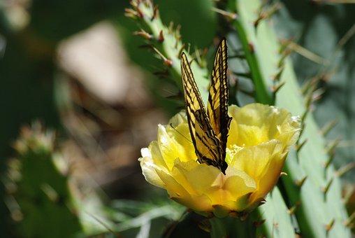 Flower, Blossom, Blooms, Petals, Cactus