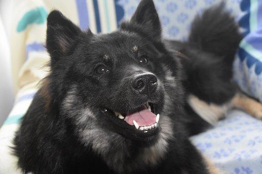 Dog, Pup, Crocs White, Truffle Dog, The Teeth Of Dogs