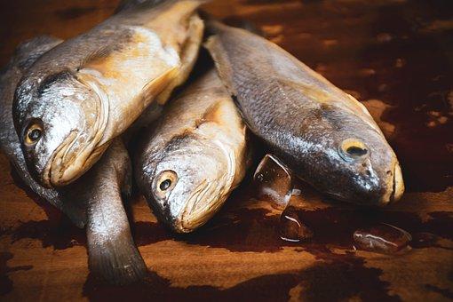 Fish, Raw Fish, Seafood, Salmon, Raw, Food, Fresh, Tuna
