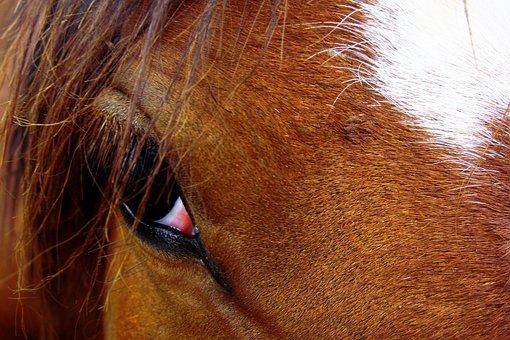 Horse, Horses, Animal, Background, Closeup, Stallon