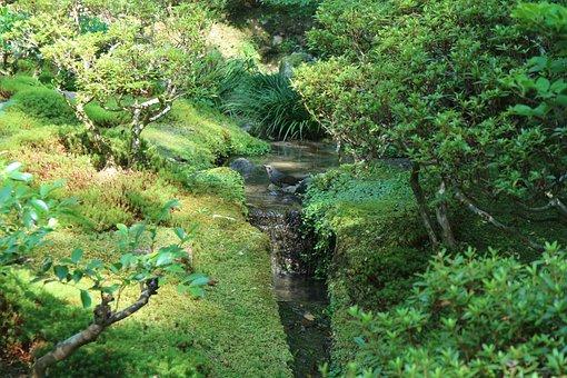 Bird, Nature, Forest, Bach, Animal World, Landscape
