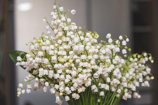 Flowers, Lilies Of The Valley, May, Spring, Bouquet