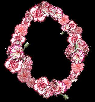 Carnation, Flowers, Pink, Bloom, Blossom